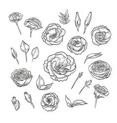Hand drawn elegant lisianthus vector