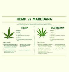 Hemp vs marijuana horizontal infographic vector