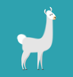 Lama isolated cute alpaca animal south american vector