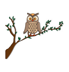 owl bird in branch vector image