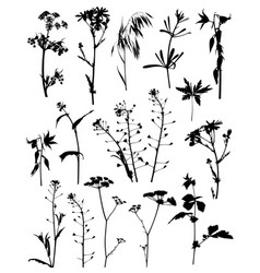 silhouettes flowers and plants vector image