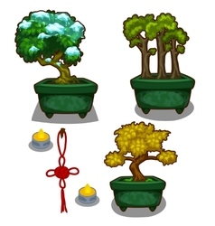 Three little tree bonsai candles and decoration vector