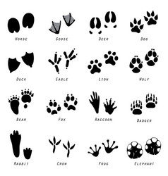 Animal spoor footprints icon vector