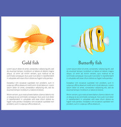 Butterfly and gold fish colorful poster with text vector