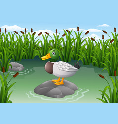 cute duck on the rock vector image