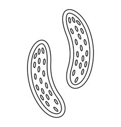 Epithelial cell icon outline style vector