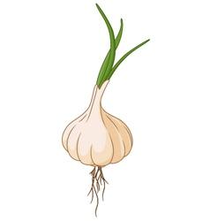 Garlic for you design vector