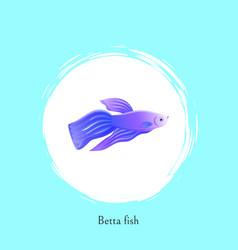 Aquarium betta fish picture in white spot poster vector