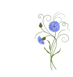 Bunch of blue cornflowers isolated on white vector