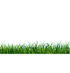 Seamless grass border isolated on white or vector