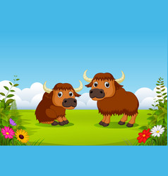 Two big brown bison playing in the green field vector