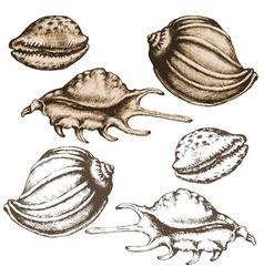 shell sketch vector image vector image