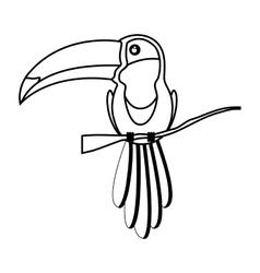 toucan bird animal vector image
