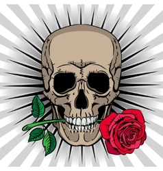 Skull holding a rose in his mouth vector image