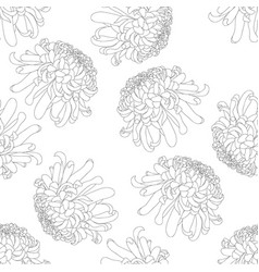 Chrysanthemum outline on white background vector