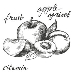 Apple and apricot fruit group set hand drawn vector