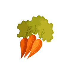 Cartoon style carrot vegetables with green leaves vector