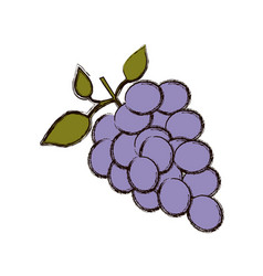 Color blurred silhouette of bunch of grapes vector