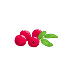 Cranberry fruits or berries food garden forest vector