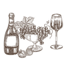 hand drawn bottle of wine with grapes and vector image