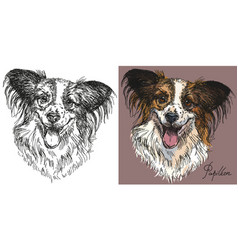 Papillon dog in black and white and colorful vector