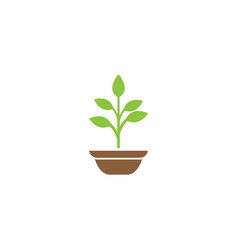 plant in the pot with some leaves for logo design vector image