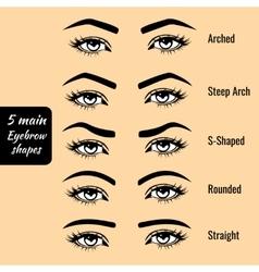Basic eyebrow shape types vector image vector image