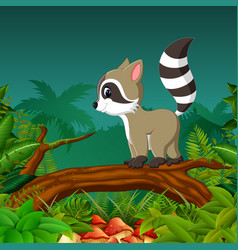 Beautiful view with the dark grey racoon vector