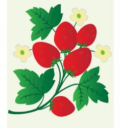 Berries and flowers strawberry vector