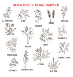 Best herbal remedies for treating constipation vector