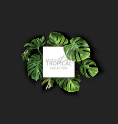 Monstera frame with green tropical leaves vector