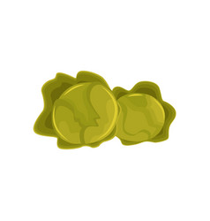 cartoon style green heads of cabbage vegetables vector image