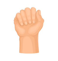 Detailed hand clasped in fist isolated on vector