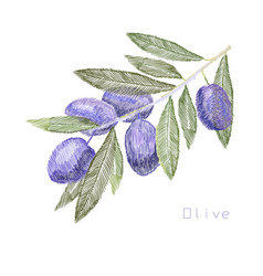 embroidery needlework with olive vector image