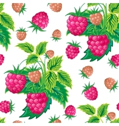 Pattern of raspberry hand painted Fruit seamless vector image vector image
