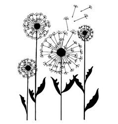 abstract dandelion on white background vector image vector image