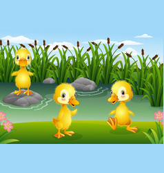 cartoon little ducklings playing in the pond vector image