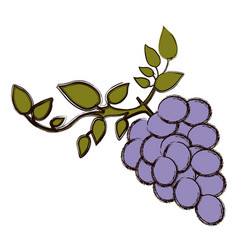 Color blurred silhouette of bunch of grapes with vector