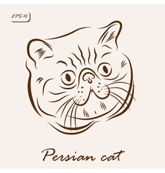 Persian cat vector image vector image
