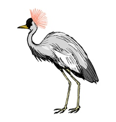 African crowned crane vector image