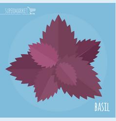 basil flat design icon vector image vector image
