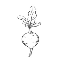 Beet vegetable outline icon vector