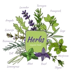 Set of hand draw herbs for food and cosmetic vector