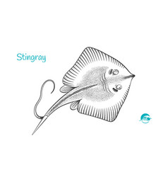 Stingray hand-drawn vector