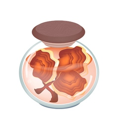A Jar of Preserved Ling Zhi Mushroom vector