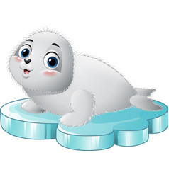 cartoon baby seal on the floe vector image