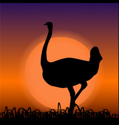 Ostrich in africa black silhouette on sunset vector