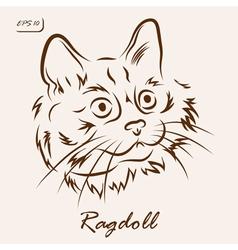 Ragdoll cat vector