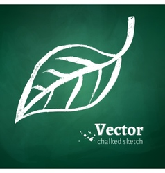 Chalked leaf vector image