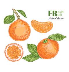 orange isolated on white background fruit vector image